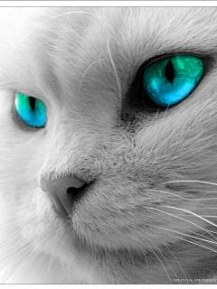 Кошачья мордочка the cat