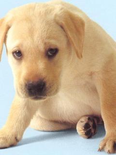 Новорожденный песик dog
